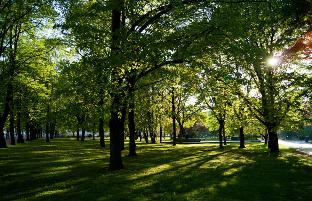 Legacy West Green Space